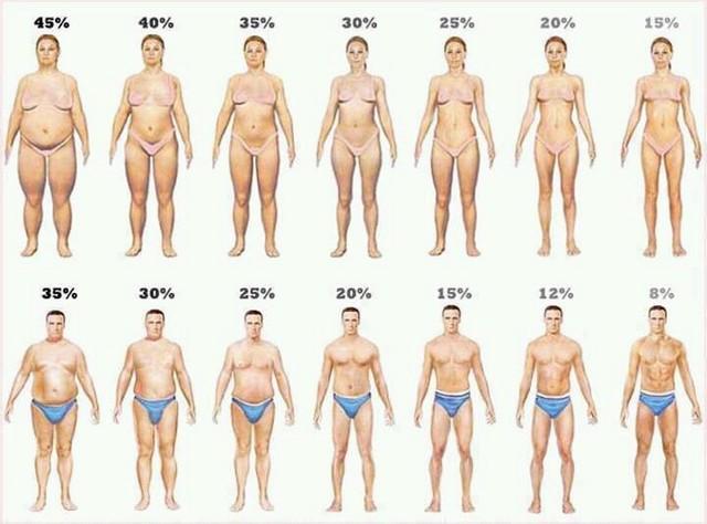 report代写,BMI,留学生作业代写,Study report,论文代写