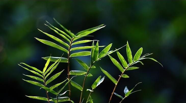 Original ecological,原生态元素,essay代写,paper代写,北美作业代写