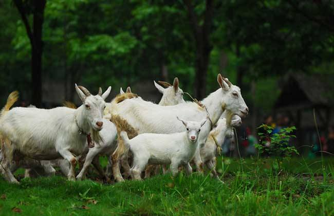 Herding phenomenon,羊群现象,essay代写,paper代写,作业代写