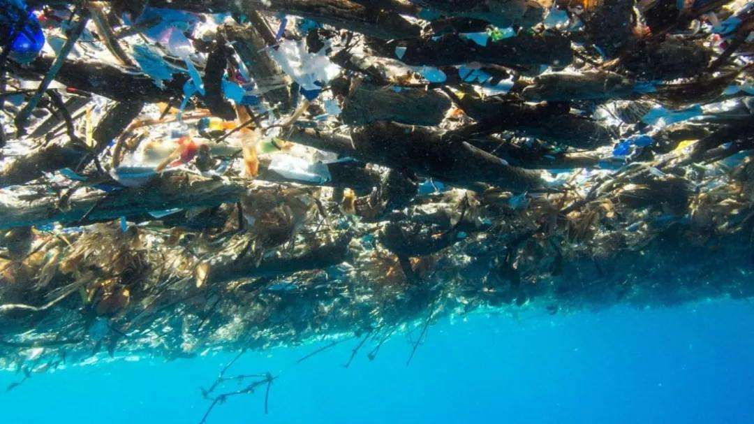 microplastics,微塑料对海洋生态的影响,essay代写,作业代写,代写