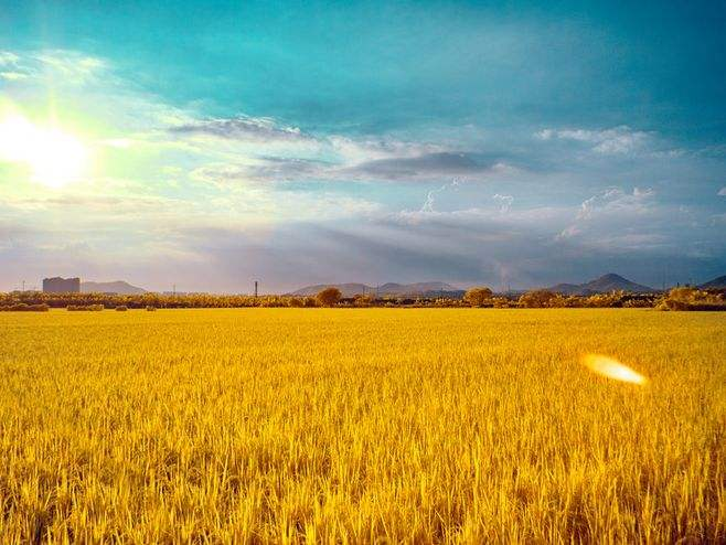 Rice planting and breeding model,稻田种养模式,essay代写,作业代写,代写